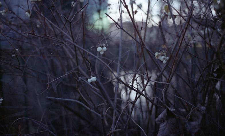 http://oikopetersen.com/files/gimgs/th-59_eloy_winter128.jpg